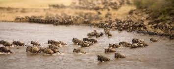 african safari animals best african safari tours our top 10 picks go2africa com
