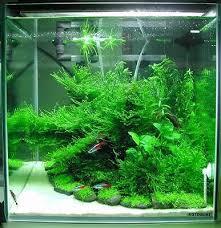 japanese aquarium japanese aquarium tìm với google aquarium pinterest