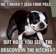 Boston Terrier Meme - lacy k wood on twitter how i feel after 3 timhortons