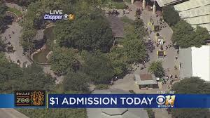 Dallas Zoo Map by Thousands Expected For Dollar Day At The Dallas Zoo Youtube