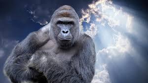 Gorilla Memes - the best gorilla meme is here
