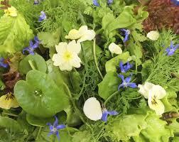 organic edible flowers 31 best borage maddocks farm organics growing using organic