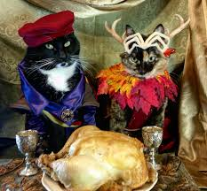 cat of the feline variety happy thanksgiving critters