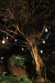 Lit Branches Lanterns Hanging From Tree At Night Stock Photo Image 63787825