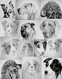 pet drawings in tones of black and white from a photo