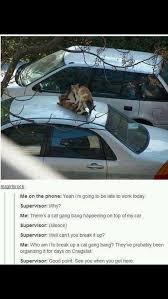 Gang Bang Memes - cat gang bang imgur