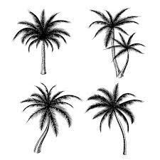 hand drawn palm trees sketch set graphics creative market