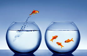 Goldfish In A Vase Five Keys To Entrepreneurial Growth Cox Blue