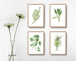 les herbes de cuisine herbs bouquet print kitchen botanical print parsley