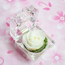 Fresh Cut Flower Preservative by Nice Moment 10 Colors Preserved Fresh Flower Forever Rose With