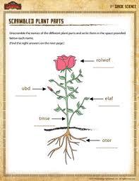scrambled plant parts u2013 free 1st grade science worksheet