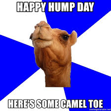 Hump Day Camel Meme - happy hump day here s some camel toe classics camel meme generator