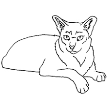preschool jungle coloring pages top 10 free printable jungle animals coloring pages online