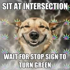 Best Dog Memes - best of the stoner dog meme 19 pics pleated jeans