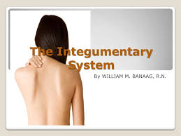 Human Anatomy Integumentary System The Integumentary System Slide Show