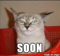 Soon Cat Meme - soon cat meme on imgur