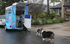 Make Bathtime Fun For Your Dog Bbb Business Profile Awesome Doggies Mobile Grooming