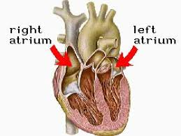 Gross Anatomy Of The Human Heart How The Body Works Inside The Heart Youtube