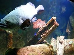 Bass Pro Shop Home Decor Images Officials Unveil New Details For Museum Aquarium At Bass