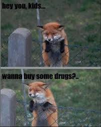 Swiper The Fox Meme - drug dealer fox meme by tash2090 memedroid