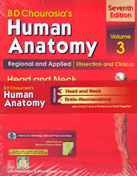 human anatomy 6th edition gallery human anatomy image