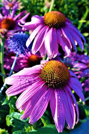 free photo flora plants garden flowers summer flowering max pixel