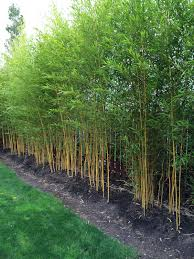 garden design garden design with growing bamboo in the home