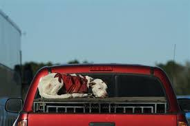 Truck Bed Dog Kennel Good Samaritan Helps Rescue Abused Dogs
