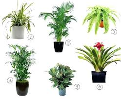 plant grow lights lowes indoor plant lighting lowes best low light indoor plants lighting