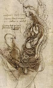 Leonardo Da Vinci Human Anatomy Drawings Dibujos De Leonardo Da Vinci Parte 1 Draw Anatomy And Sketches