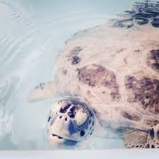 Blind Turtle Prices The Turtle Hospital 172 Photos U0026 99 Reviews Veterinarians