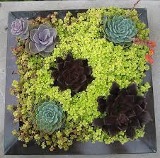 container flower garden ideas photograph gardening c