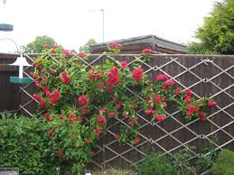 expanding trellis fencing the 25 best expanding trellis ideas on pinterest organic