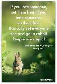 Funny Bunny Memes - the daily bunnies on twitter yes just don t let your bunnies free