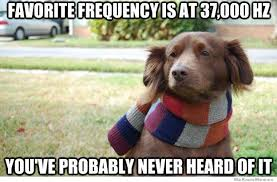 Hipster Dog Meme - hipster dog s favorite frequency weknowmemes