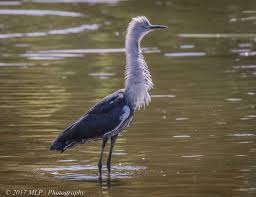 Heron Meaning by Elster Creek The Gap Year And Beyond