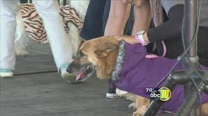 spirit halloween visalia ca valley animal center holds halloween themed fundraiser abc30 com