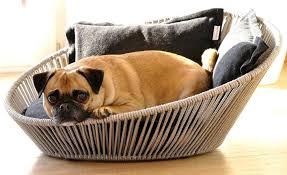 canap pour petit chien pas cher canape canape pour petit chien pas cher canape pour petit chien
