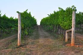 17 january 2011 keswick vineyards