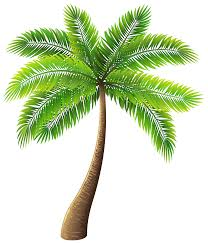 palm tree png clip best web clipart