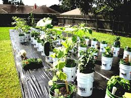 container vegetable gardening beginners the gardening container
