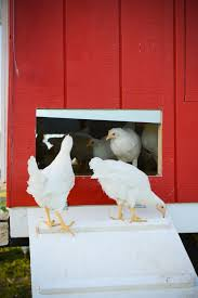 small chicken pastured poultry farm to foster innovation for small chicken farms