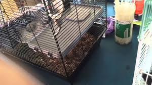 Cheap Rat Cage How To Choose The Right Rat Cage I Got Mine From Petsmart Youtube