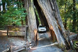 California National Parks images Skip black friday shopping and visit these state and national jpg