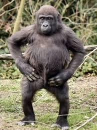 Sexy Monkey Meme - sexy monkey meme generator
