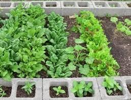 33 best concrete block raised bed gardening images on pinterest