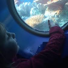 finding nemo submarine voyage 234 photos u0026 132 reviews