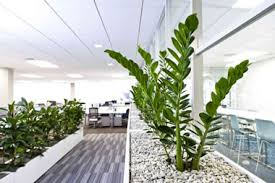 plants for office office plants google search informal meeting spaces