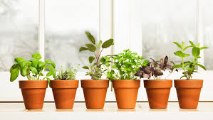 Window Sill Herb Garden Designs How To Grow A Mini Herb Garden In Your Kitchen