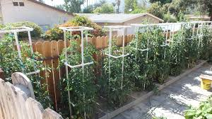 Pvc Pipe Trellis Pvc Pipes Are Very Versatile Expert Diyer Shares 14 Nifty Ways To